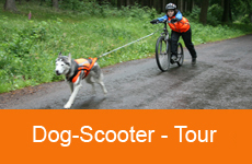 10dogscooter