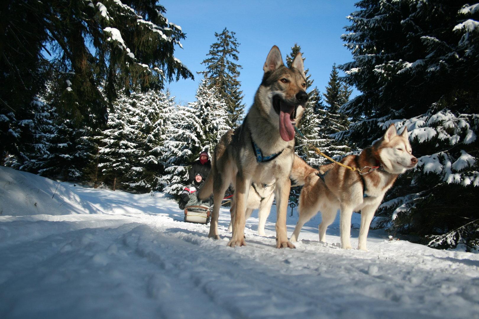 Hundeschlittenfahrt