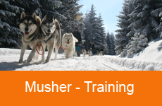 4Mushertraining